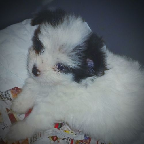Greatmemories Puppylove 😘😍🐶 Puppies! Furball Blackandwhite Feeling Loved Happiness