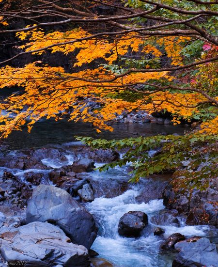 Rock - Object Waterfall Autumn River Nature Water Landscape Outdoors Beauty In Nature Scenics Stream - Flowing Water Leaf No People Tranquility Day Tree