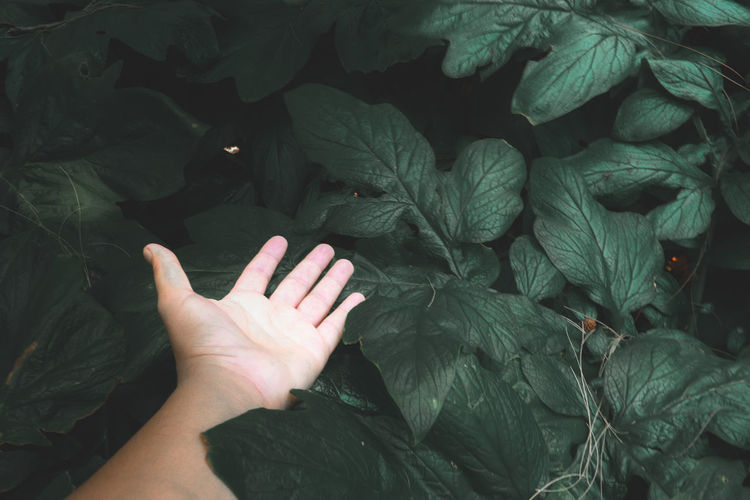 Cropped image of person with leaves