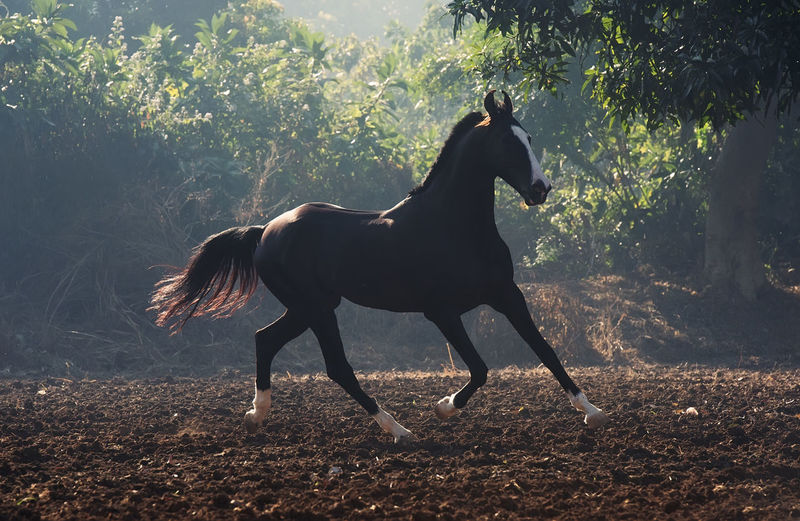 Full Length Of A Horse