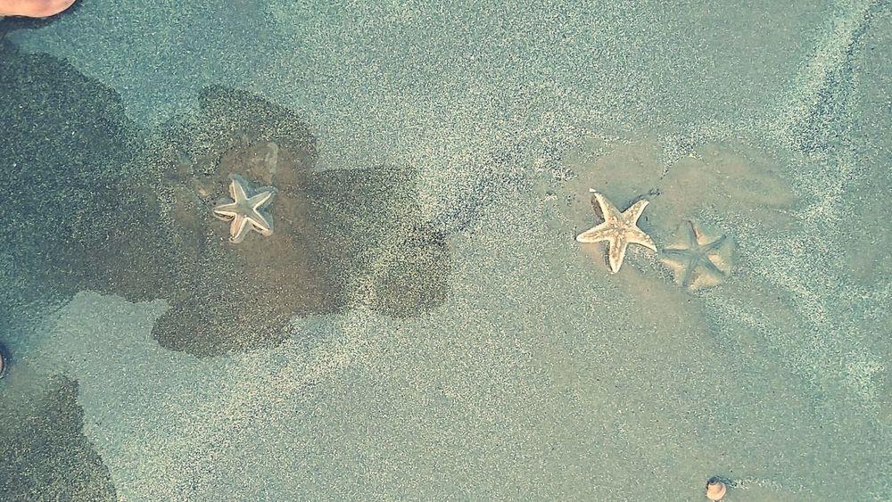 Digha Nature Beach Sunset Water Starfish  Starfish At Beach