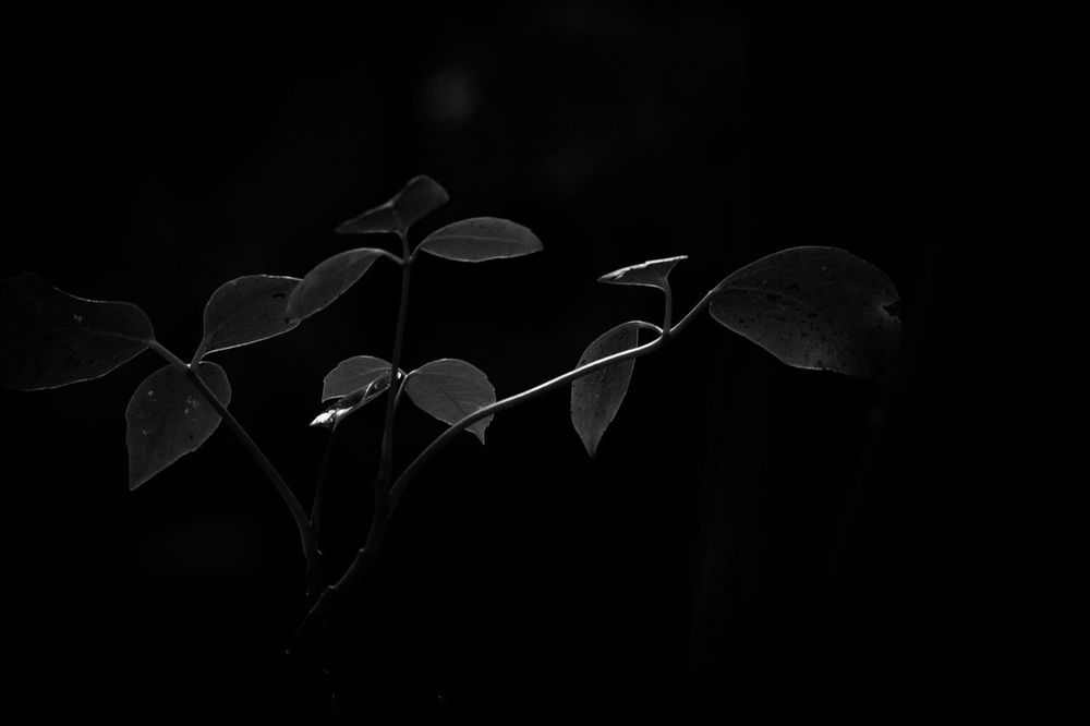 Fragility Beauty In Nature Nature Leaf Night Growth