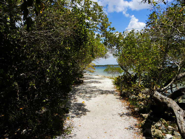 A park in Bradenton Florida at the mouth of the Manatee River a great place to take the family. Bees Trails Trees Beach Blue Sky Butterflies Clouds Day Geckos Landscape Manatee River Nature No People Outdoors Park Pathways River Sand Sky Water