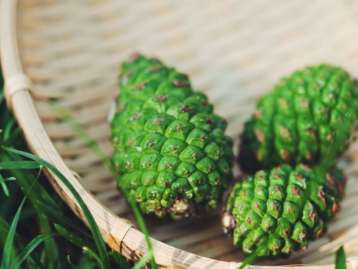 pick green pine cones. Cone Green Pickup Plant Capture The Moment Close-up Deceptively Simple Enjoying Life Eye4photography  EyeEmBestPics EyeEm Gallery EyeEm Best Shots From My Point Of View Getting Inspired Hello World Minimalism Selective Focus Simple Photography Simple Things In Life Simple Moment Still Life Taking Photos Relaxing Nature's Diversities The Great Outdoors - 2016 EyeEm Awards