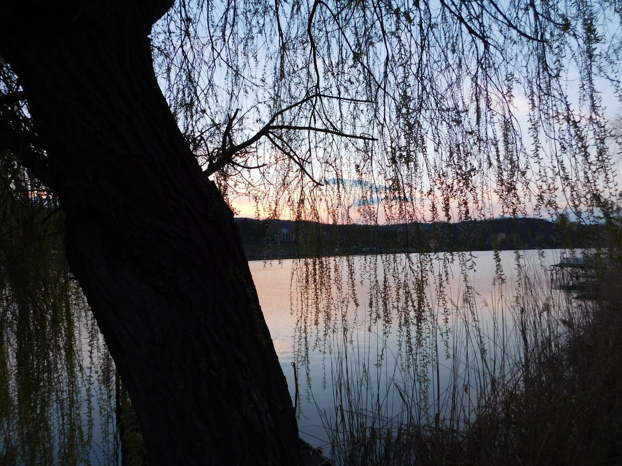 View Of Tree By Lake