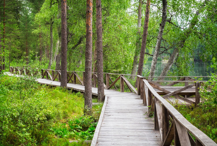 Forest landscape with wooden path and lush foliage trees at summer day in Finland Forest Tree Wood - Material Bridge Green Color Connection Footpath Boardwalk Direction Tranquility Footbridge WoodLand Wood Outdoors Bridge - Man Made Structure The Way Forward No People Nature Day Finland Landscape Path Hiking Daylight Lush Foliage