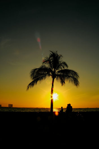 Silhouette palm tree by sea against sky during sunset