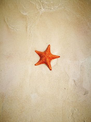 San Blas Island San Blass Panama Starfish  Star Shape Sea Life Sea Animal Wildlife No People Nature Beauty In Nature Beach Sand Natural Beauty Islandphotography Simply Beautiful Beauty Colorful Life Colorful Animal Themes