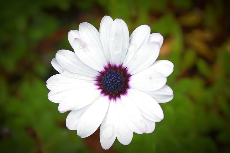 Freshness Flower Flower Head Close-up White Color Petal Nature Day Plant Focus On Foreground Outdoors Beauty In Nature Fragility No People