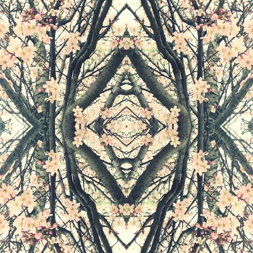 Sonabeam Symmetry ArtWork Reflections Art Symetry Mirrored Image Pattern Pattern Pieces Mirrored Reflection Nature Showcase April Floral Flora Flowers Floral_perfection Abstract Flowerporn Flower Blossom Blossoms  Spring Flowers Fractal Fractals