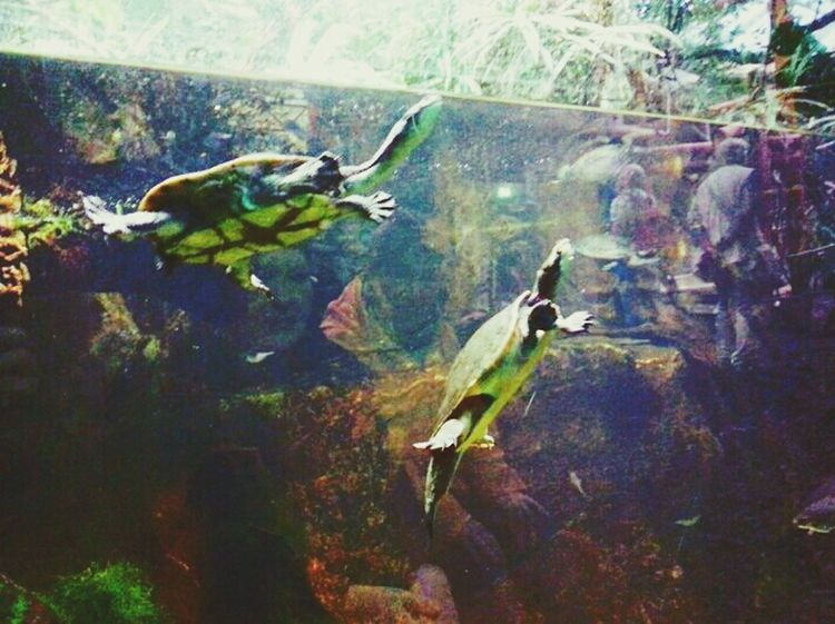 Turtles Schildkröte Zooporn