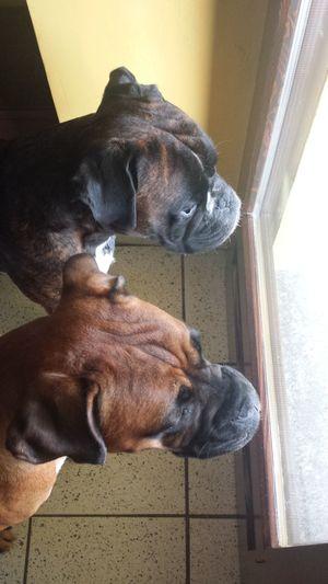 Chuck&Lola I Love My Dog First Eyeem Photo