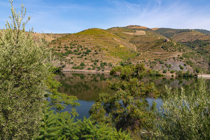 Douro river with vineyards in surrounding valley Douro  Hills Portugal Ancient Civilization Architecture Beauty In Nature Day Environment Growth History Landscape Mountain Nature No People Non-urban Scene Outdoors Riverbank Scenics - Nature Sky The Past Tranquil Scene Tranquility Tree Vineyard Water