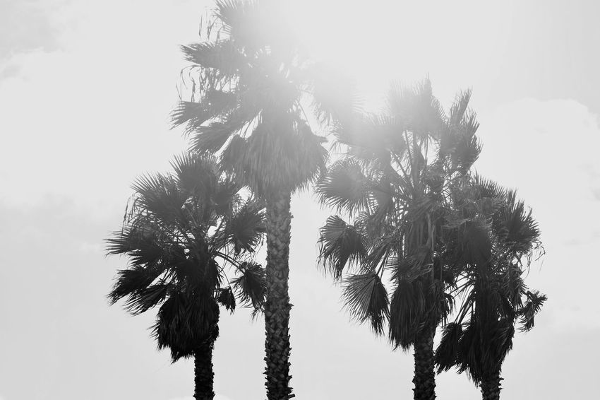 Tree Low Angle View Palm Tree Growth Nature Sky Outdoors