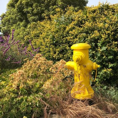 Yellow Plant No People Nature Sunlight Growth Day Outdoors Fire Hydrant