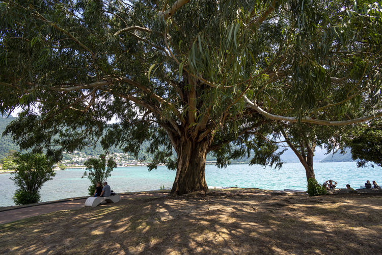 Eucaliptus Tree Plant Water Land Nature Beach Sea Day Beauty In Nature Growth Outdoors Scenics - Nature Group Of People Men Shadow Incidental People Leisure Activity Sand Sunlight