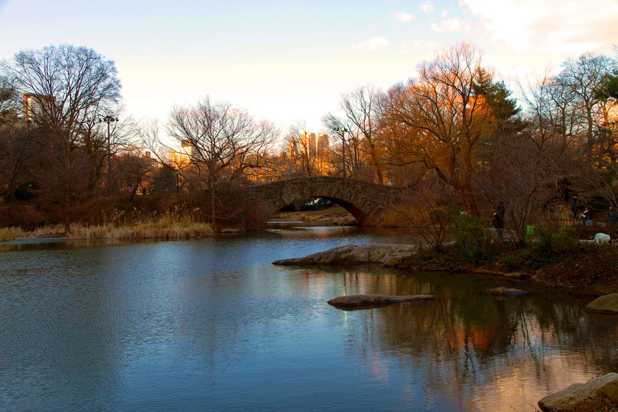 Central Park in Winter Bare Tree Beauty In Nature Day Nature No People Outdoors Reflection Scenics Sky Tranquil Scene Tranquility Tree Water Waterfront