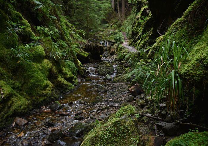 Forest Stream Argyll