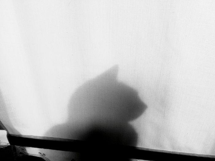 Catsagram EyeEm Best Shots Cat Cat♡ Cats Cat Lovers Catsofinstagram Catoftheday Cats Of EyeEm Catlovers Cats 🐱 Shadow Shadows & Lights Shadows Shadow-art Shadows & Light Shadows_collection Shadows And Backlighting ShadowSelfie Shadows.  Pet Portraits