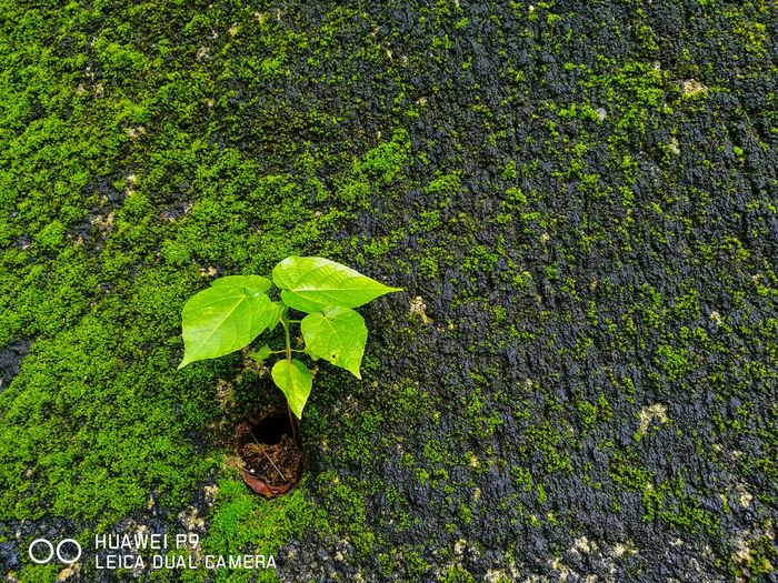 Huawei P9 Leica Dual Camera 華為p9 HongKong green green green 西貢