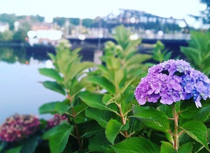 Shades of purple to brighten your Tuesday @connecticutgram @igersnewengland Connecticutgram Ig_connecticut Igersconnecticut Igersnewengland Autumninct Autumn Autumnthroughmyeyes Nhv Thatsdarling Thatsdarlingmovement Newengland Northeast VSCO Vsvocam Comment Instaautumn September ColorsOfAutumn Hydrangeas Shadesofpurple Lavender