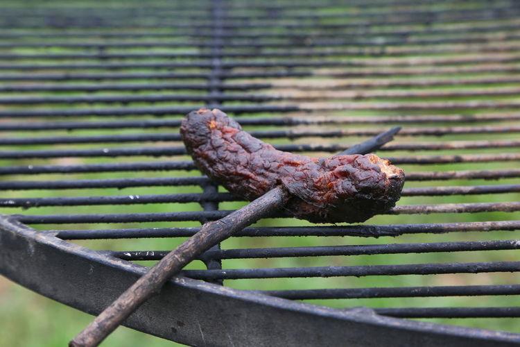 Close-Up Of Lizard On Rusty Metal