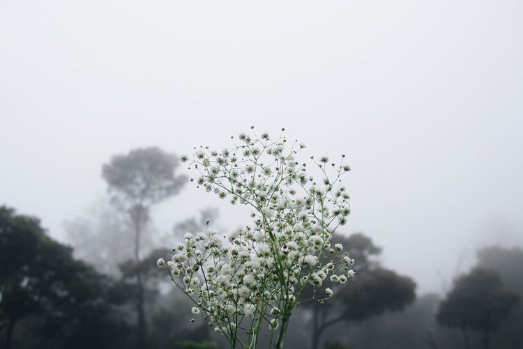 Low angle view of plants against sky during foggy weather