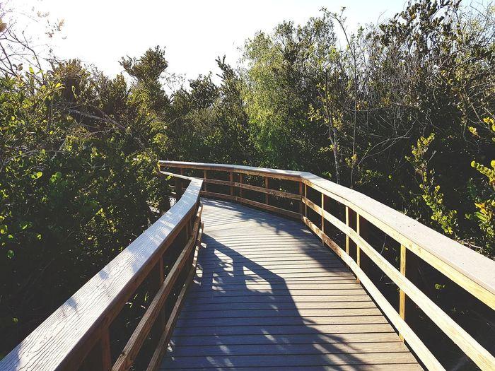Wooden footbridge along plants and trees