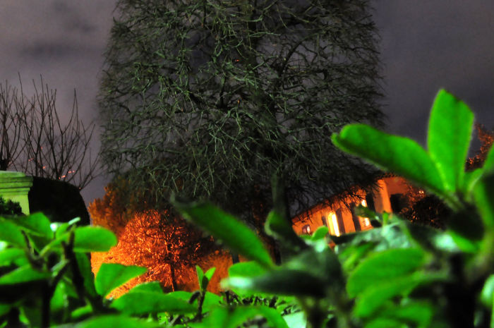 Aix En Provence Beauty In Nature Branch Burning Close-up Flame Forest Green Color Growth Illuminated Leaf Long Exposure Nature Night No People Outdoors Plant Several Colors Tree
