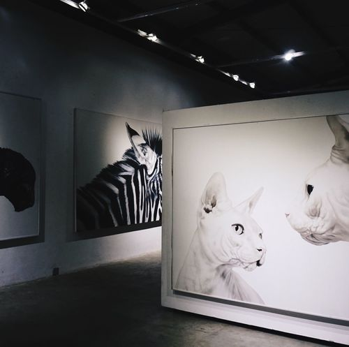 wall to wall- Animal Themes Cat ArtWork Artspace