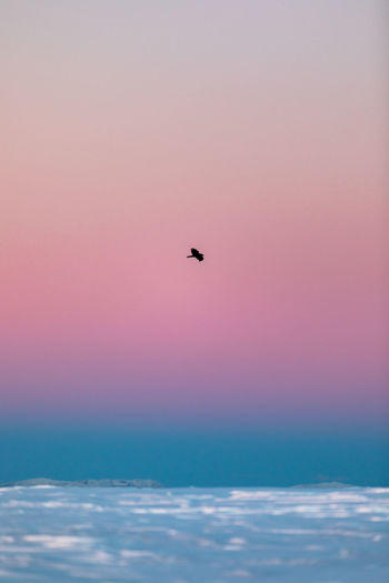Silhouette bird flying over sea against sky