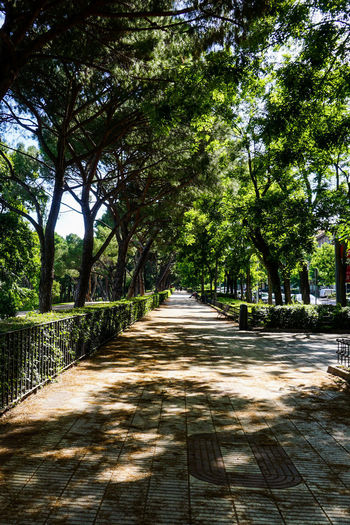 Empty footpath in park