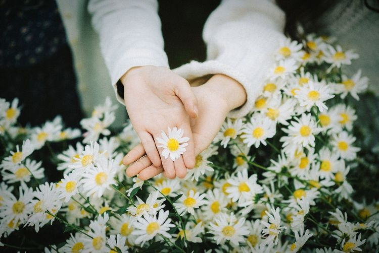 Directly above shot of hands holding white flower over plants