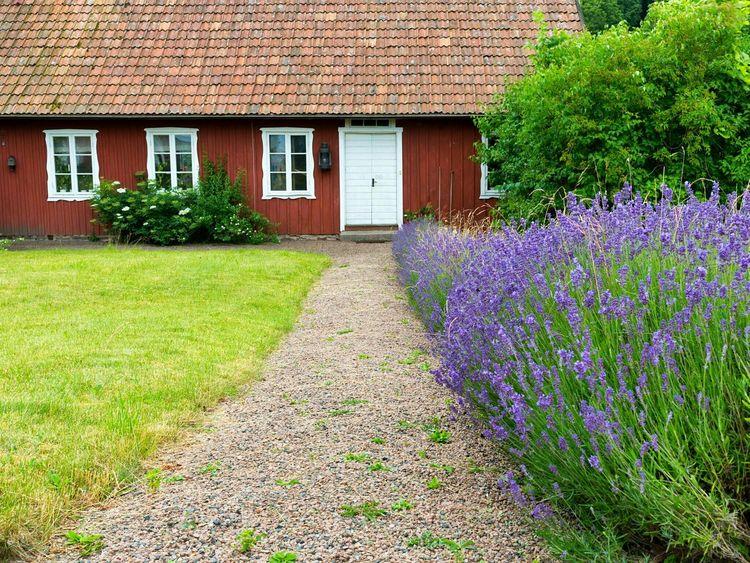 Summer Scandinavia Sweden Bastad Lavender Simplicity