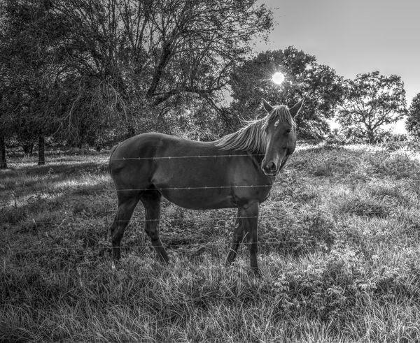 EyeEm Nature Lover Tadaa Community EyeEm Best Shots - Black + White Horse Arcadia, FL