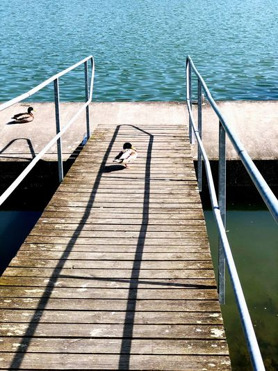 Wasser Steg Enten Nature The Way Forward Wood - Material Footpath Pier Sunlight Day Water No People Direction Outdoors