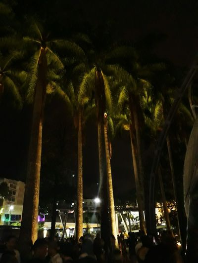 Circo Voador Music Hall, Lapa, RJ Tree Night Palm Tree Outdoors Landscape No People Illuminated Lifestyles