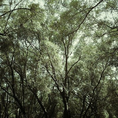 Santeufemia Olives