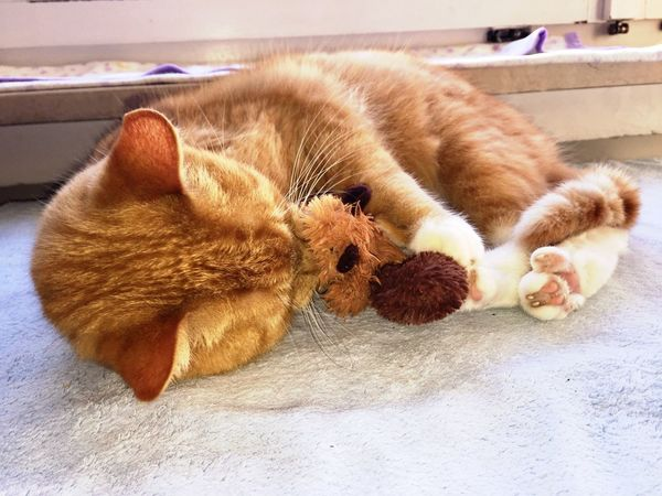 Lovely Cat 😻 Cat Love ♥ Cat Model Cat Collection Cat Relaxing  Special Moments Togetherness Ginger Cat Friendship