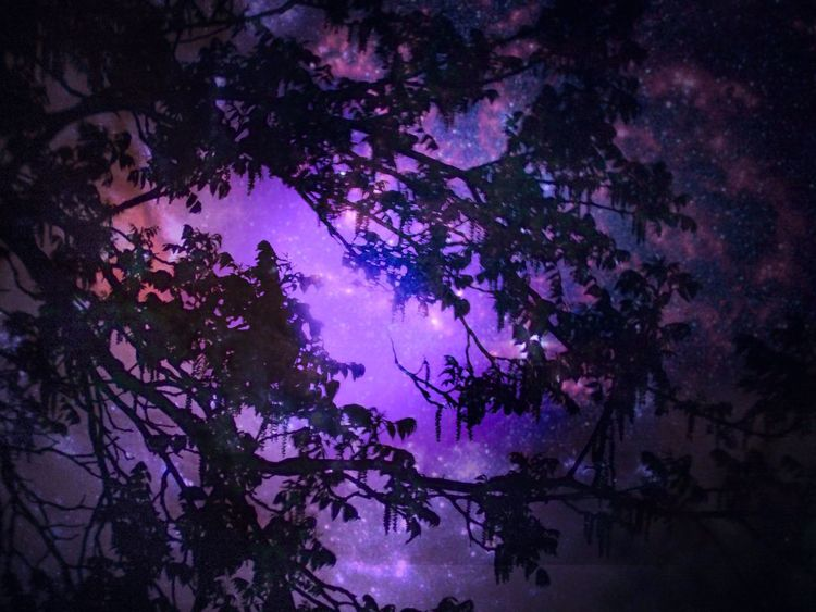 ArtWork Beauty In Nature Branch Cloud - Sky Idyllic Leaves And Sky Leaves Silhouette Low Angle View Moonlight Nature Outdoors Photo Art Photo Artistry Photo Manipulation Photo Manipulation ,edit Pink Color Purple Purple Sky Sky Space Stars Stars At Night Tranquil Scene Tranquility Tree