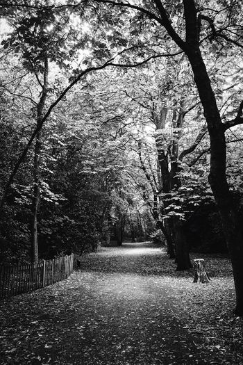 Path Woods Tree Nature Tranquility Beauty In Nature The Way Forward Tranquil Scene Outdoors Growth No People Tree Trunk Branch Bare Tree Landscape Scenics Walkway
