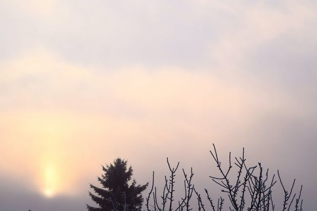 Nature Sunset Sky Silhouette Tranquility Outdoors Treetop Snowy Leaves Autumn 2016 How's The Weather Today December 2016 Showcase December It Is Cold Outside How's The Weather Today? The Places ı've Been Today Winter Is Coming... First Touch Of Winter White Color Cold Temperature Weather Sun Cold Outside ❄⛄