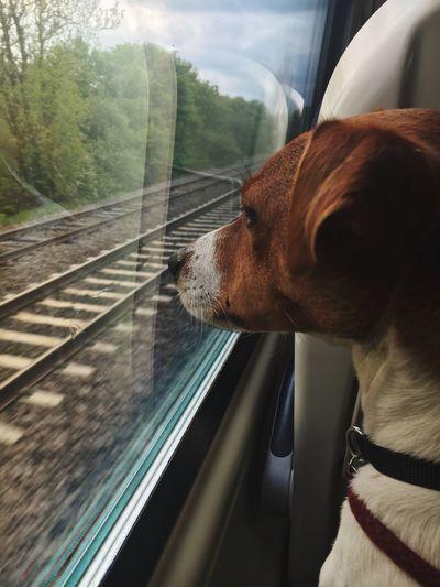 Pooch Dog Ardie Dogandaniphone First Eyeem Photo