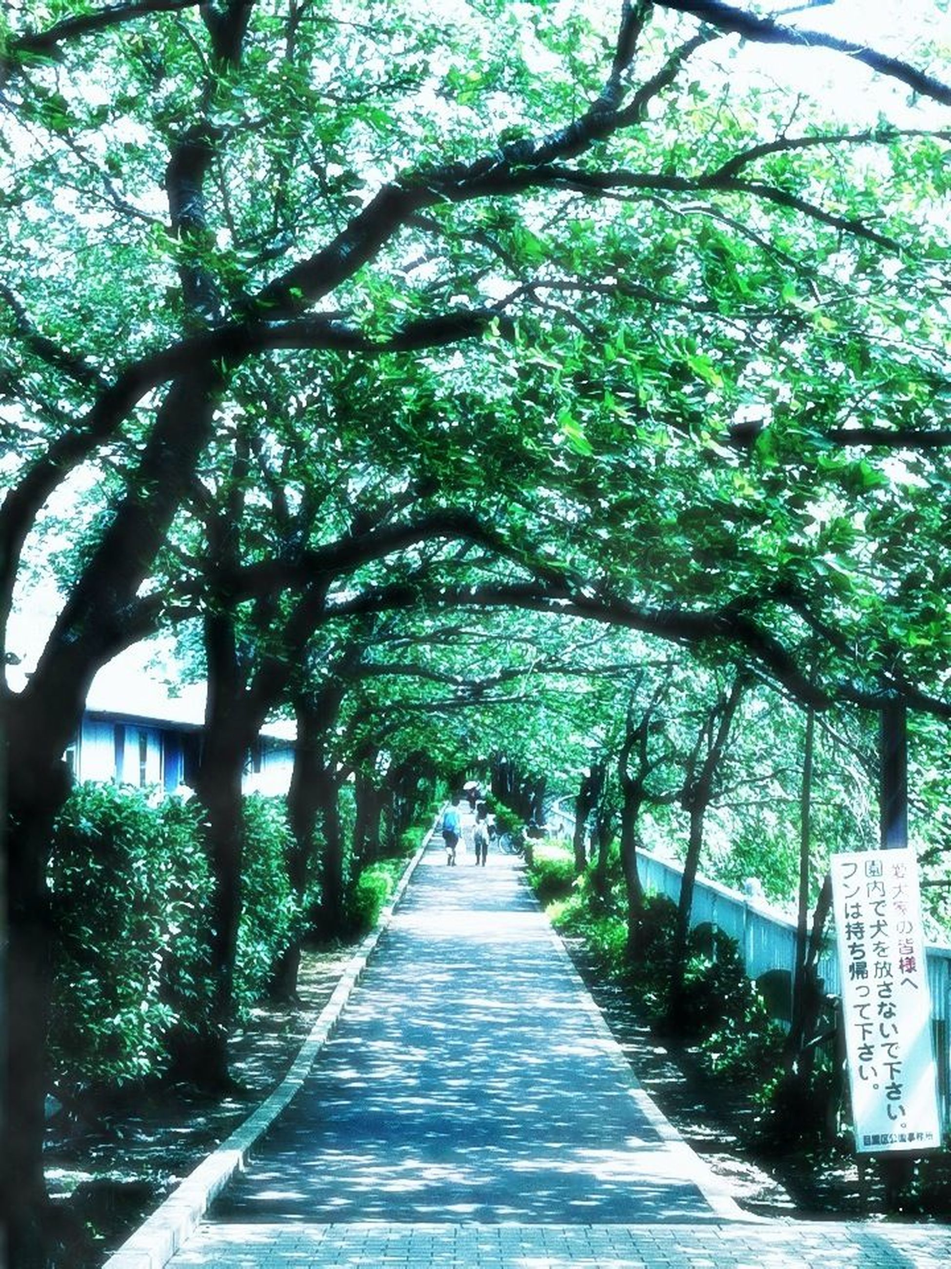 tree, the way forward, growth, branch, treelined, diminishing perspective, footpath, park - man made space, walkway, nature, built structure, tree trunk, green color, tranquility, sunlight, railing, architecture, vanishing point, day, beauty in nature