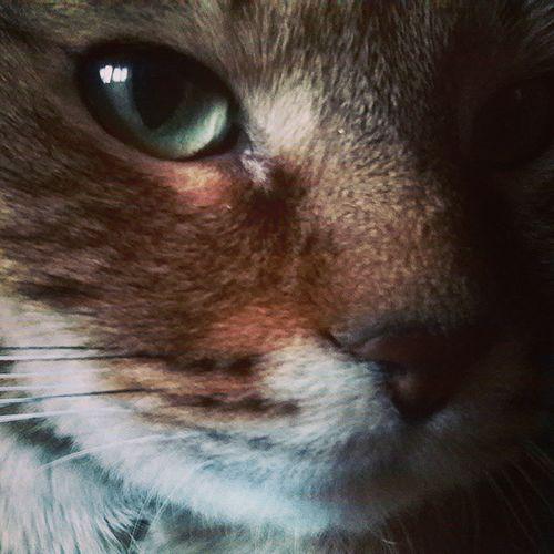 Cat пушистик мимими Мотя