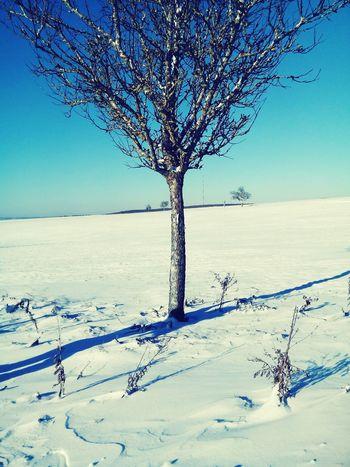 Deepfreeze Allemagne Snowtime Beautifultree  *A