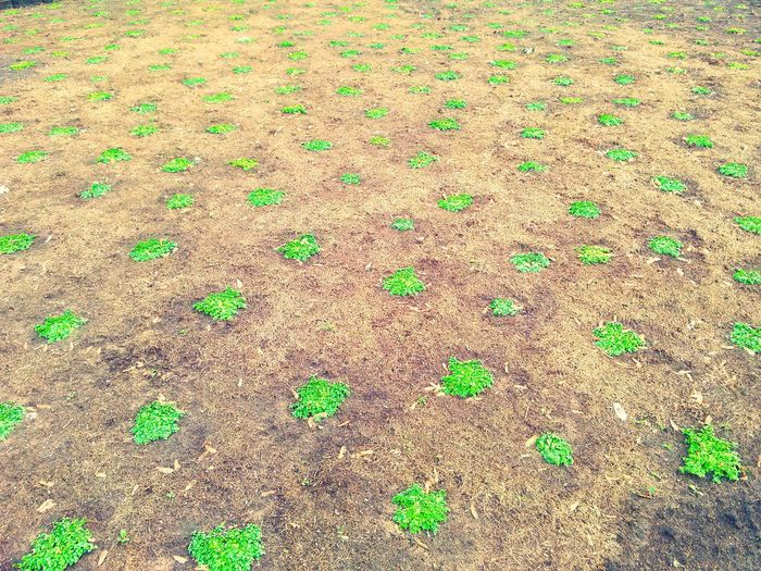 Clovers  Patches Clover Field Ground