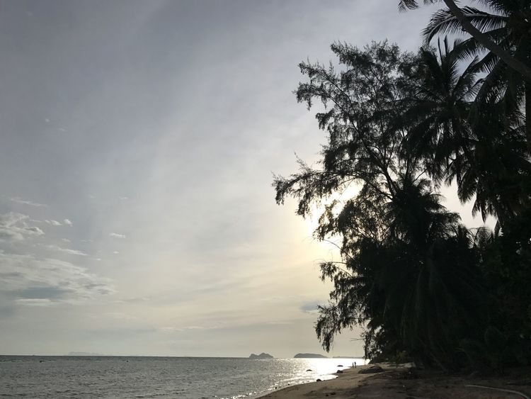 No Filter No Edit/no Filter Tranquil Scene Postcard Sunset I Phone 7 I Phone Scenics Beauty In Nature Koh Phangan Nature Water Sky Beach Outdoors Palm Tree