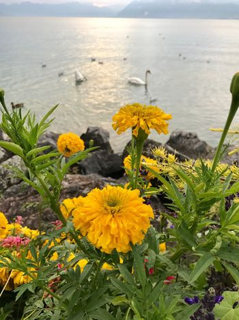 No Filter Nature Beauty In Nature Flower Water Sea Tranquility Plant Outdoors Tranquil Scene Scenics Horizon Over Water No People Growth Day Fragility Yellow Freshness Petal Beach Close-up
