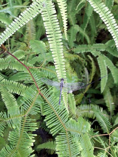 A dragon. Dragonfly Leaf Nature Wildlife Green Color Fern Beauty In Nature Plant Outdoors Freshness Forest